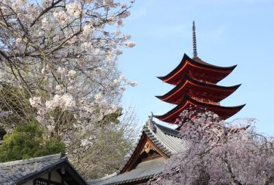 Image result for Asakusa pagoda japan cherry