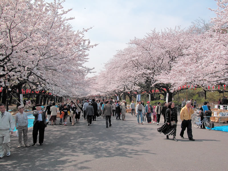 Image result for Ueno-Onshi-koen